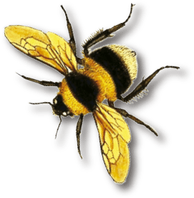 logo bee color
